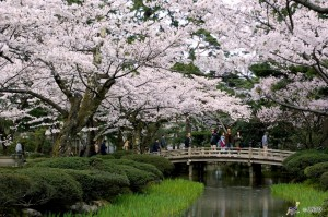 Kenrokuen Garden in Kanazawa. This is one of three most famous garden in Japan.